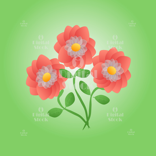 peach colored flowers idigitalstock royalty free stock images
