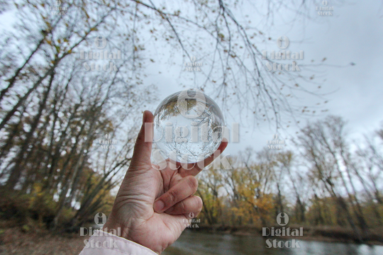 A glass ball with the reflection of the woods