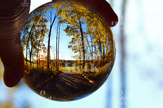 A glass sphere with the scene of woods with trees.